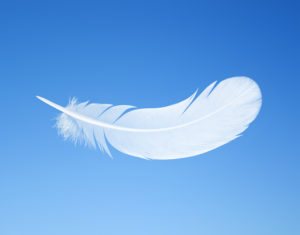 feather on the background of blue sky with space for text